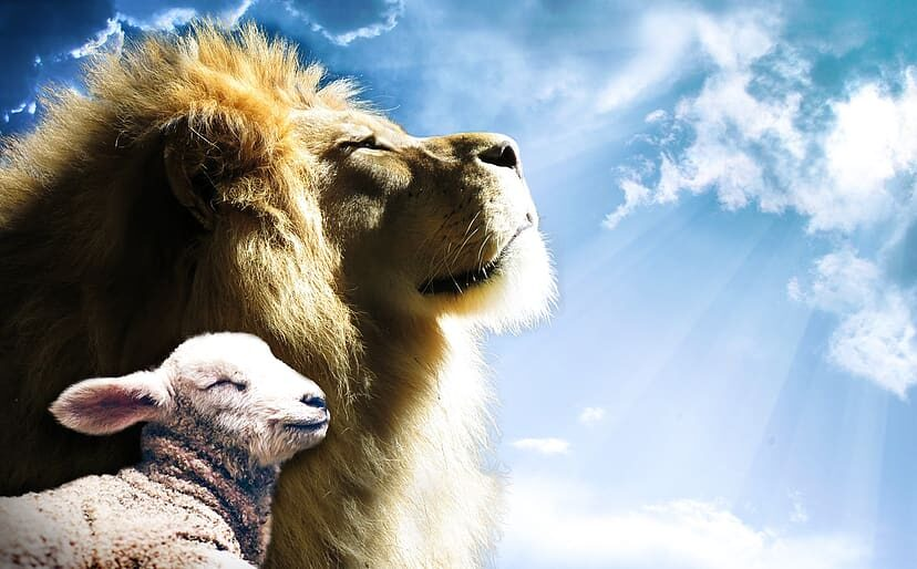 Lion and the lamb looking up to God