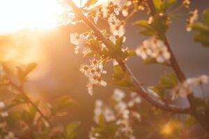Grow Spiritually This Season With An Easter Prayer Each Day
