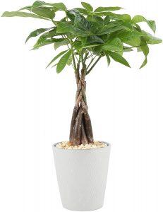 Plant, Gift Idea