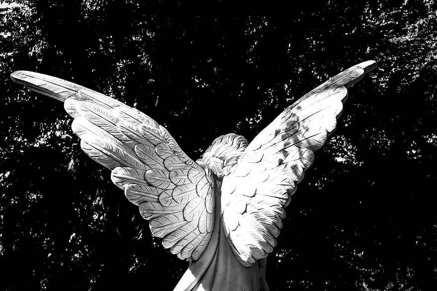 Angel, wings of angel