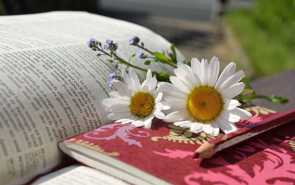 Bible, Study, Daisies, Funny Bible Verses