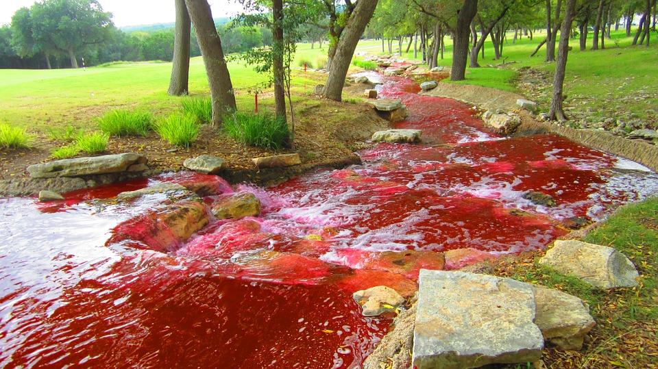 Bloody river and spring, blood water