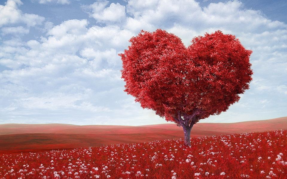 tree, love