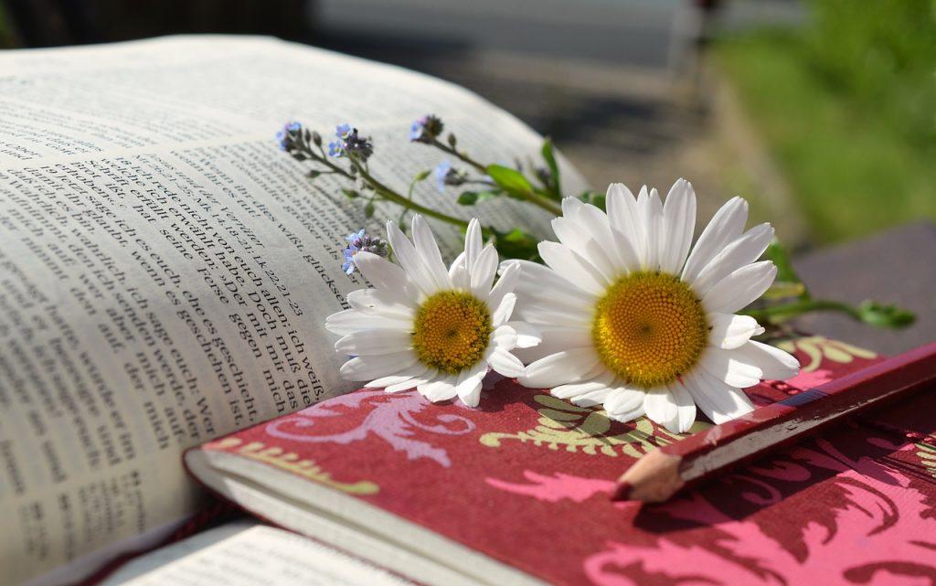 Devotion, Bible, Notebook, Learning