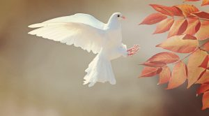 gifts of the Holy Spirit - dove
